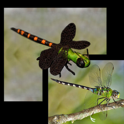 Amazon darner dragonfly and chambira ornament