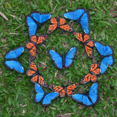 Rings of monarch and morpho butterfly ornaments