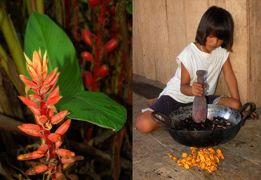 Bora girl mashing mishquipanga fruits to dye fiber