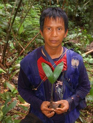 Bora man with chambira palm seedling
