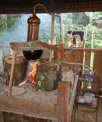 Distilling copal & rosewood to make fragrant oils