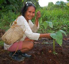 Bora artisan planting guisador in dye plant garden