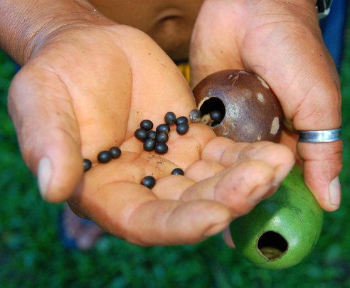 Pouring achira seeds into tutuma ornament