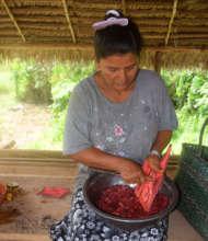 Scraping huacamayo caspi bark for chambira dye