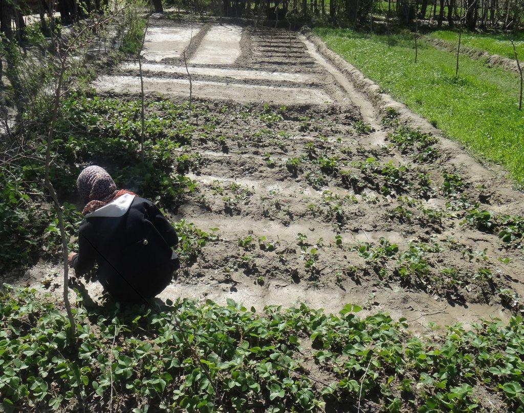 Nooria, GPFA Wholesaler working in the field
