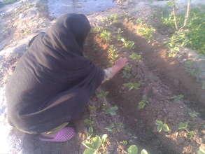 Woman tending strawberry garden