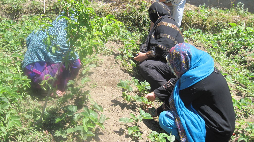 Hands-on training in the strawberry garden