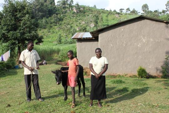 Robai, John and Samuel recieve their cow