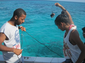 Shark-tagging expedition - baiting the hook