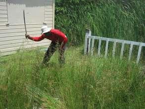 Community volunteer cleaning yard