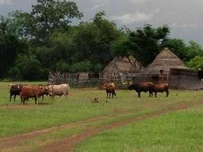 Fongoli village during the rainy season in Senegal