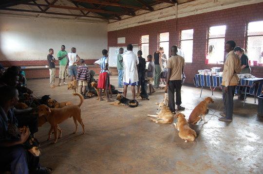 AKI supports Lilongwe SPCA's free vet clinics
