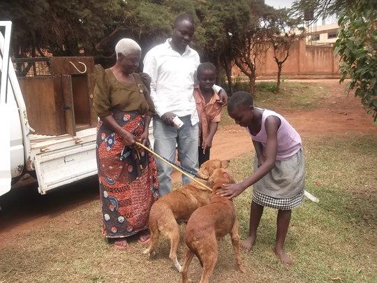 AKI supports Uganda SPCA community spay/neuter