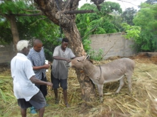 AKI supports TAWESO donkey program