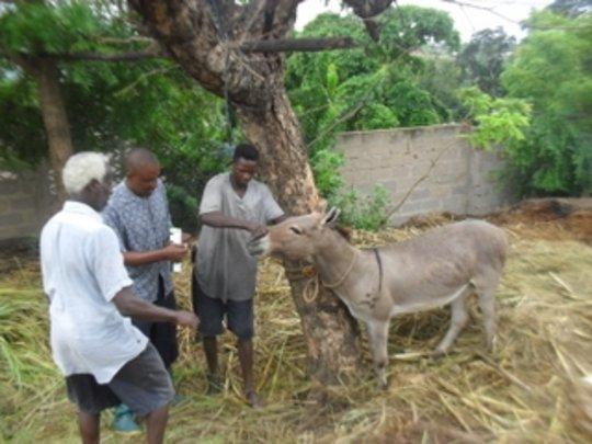 AKI supports TAWESO donkey program