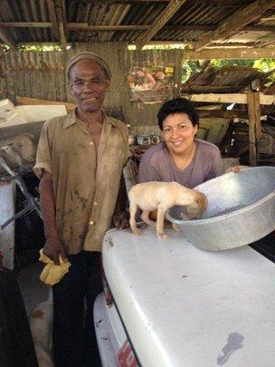 AKI supports Kingston Community Animal Welfare