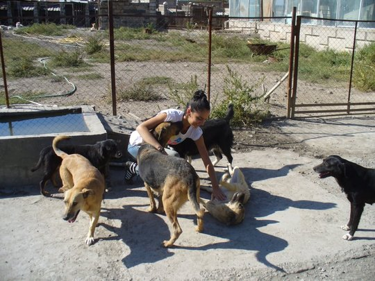 AKI supports Save the Animals-Armenia shelter