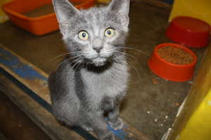 Kitty at the Walvis Bay SPCA, Namibia