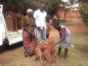 AKI supports Uganda SPCA community spay/neuter