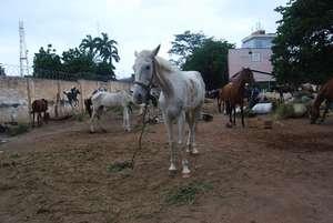 AKI supports GSPCA & Ghana's horses