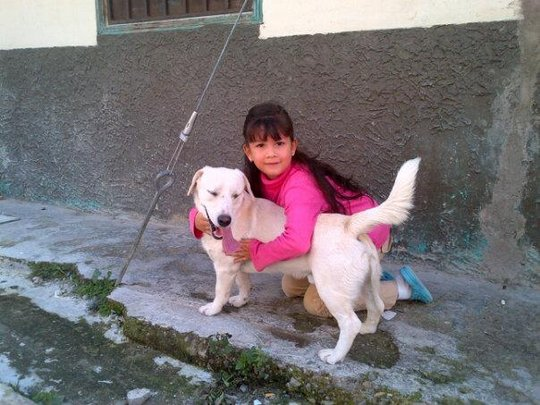 Partner w/AKI to Help Animals in up to10 Countries