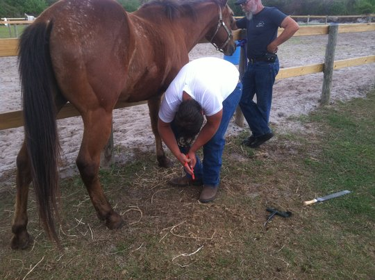 Tuffy gets a hoof trim and balance