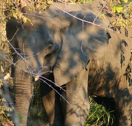 Save elephants in Malawi