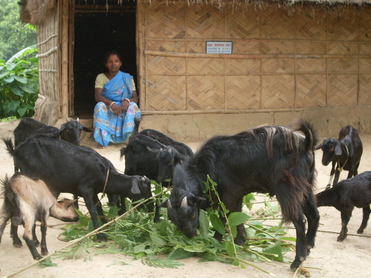Help Indian Rural Women to be Self-Employed
