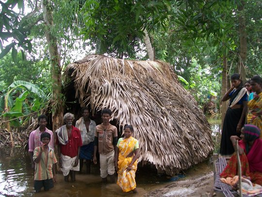 A hut made of palm leaves with tree branches