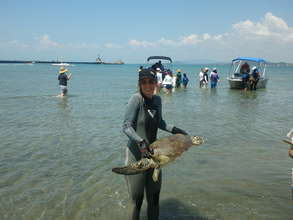 Researcher Johanna brings in a turtle for tagging