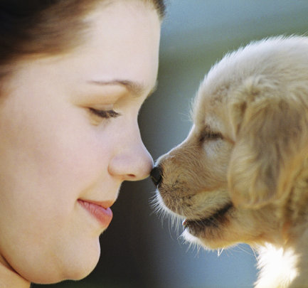 Puppy Mills = Puppy Cruelty (closed campaign)