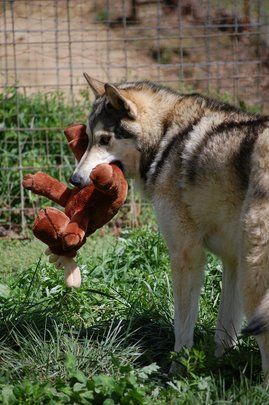 River with moose stuffie