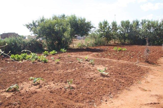 A New Community Garden - Photo #4