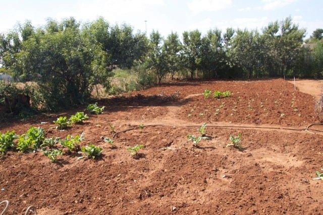 A New Community Garden - Photo #5