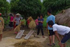 Thrashing Rice at Living Land Farm