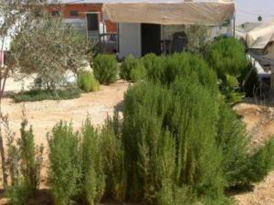 Mr. Taral's own garden