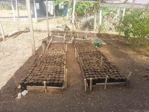 Preparation of reforestation plots. PCW.