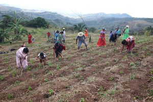 Agroforestry work in communities