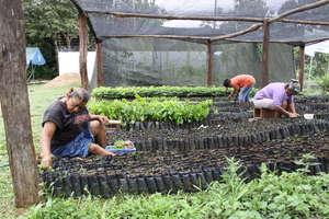 F.NATURA  Communitary nurseries