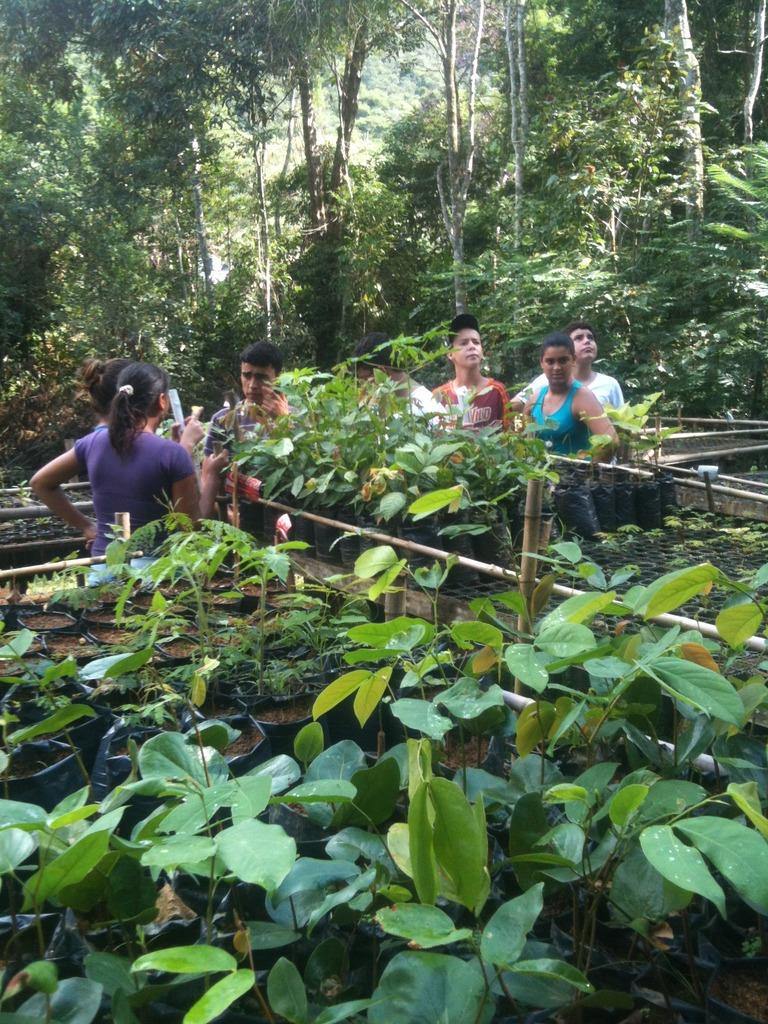 Iracambi tree nursery