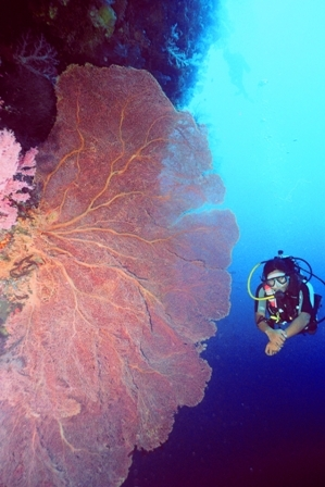 Diver with Seafan photo by Yvette Lee