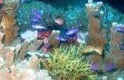 Protecting the 32,000-Hectare Tubbataha Reefs