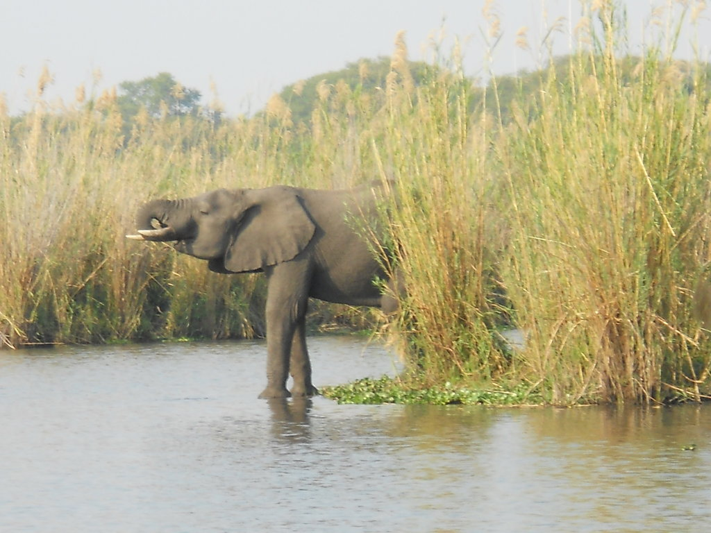 Alleviate human/wildlife conflicts in Malawi