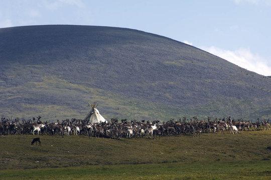 Tsataan Camp