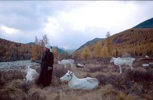 Tsataan woman with reindeer herd