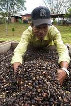 Sifting through beans in Nicaragua
