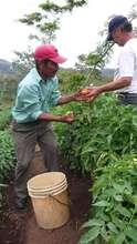 Nicaraguan Farmers