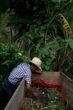 Mexico farmer hard at work