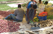 Onetime grant to start 50 vegetable & fruit vendor