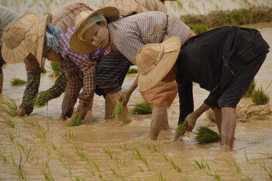 Worm fertilizer will make the water safer